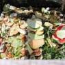 Composting - Food in compost bin