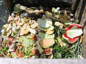 Composting - Food in compost bin