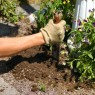 Composting - Compost in the garden