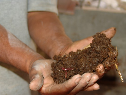 Harvesting/Using Vermicompost