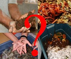 Frequently asked questions about vermicomposting