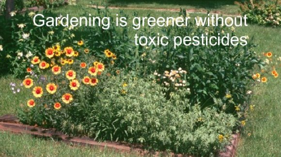 Myth busted: we don't need pesticides