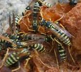 Wasps or mice in your compost pile?