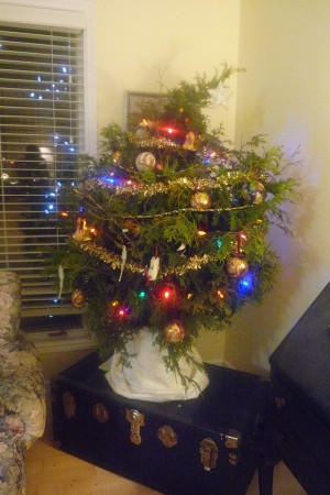 are real christmas trees greener for