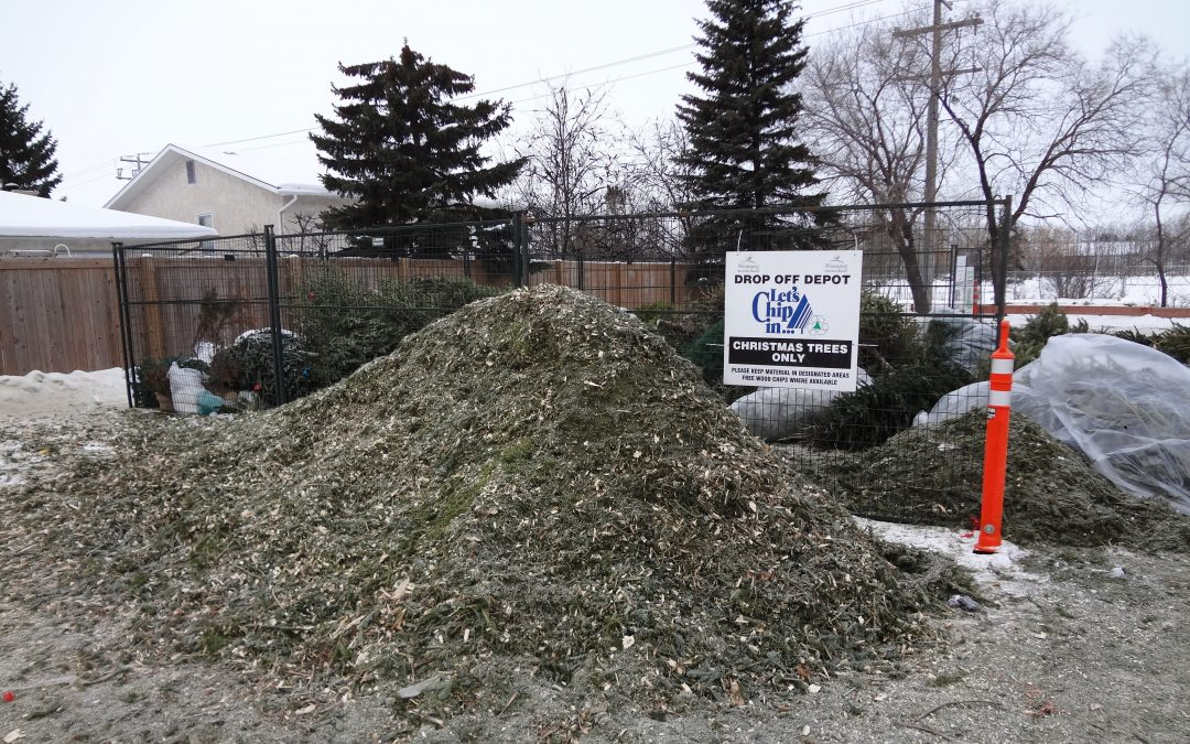 "Let's all ""Chip In"" – recycle those Xmas trees!"