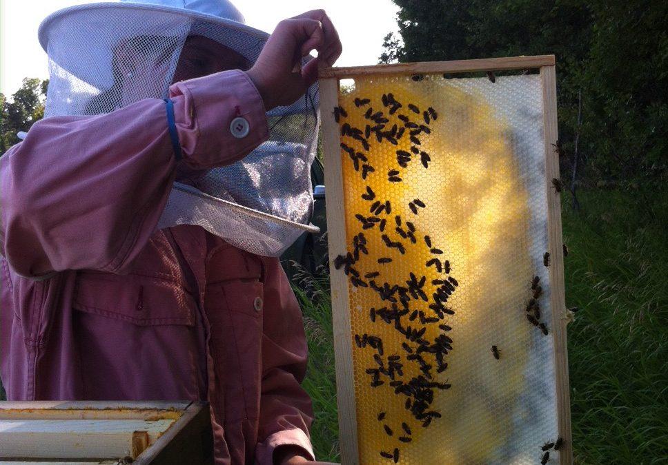 Saving our pollinators