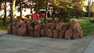 Bags of yard waste - leaves