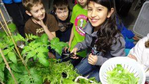 Neil Campbell School - garden - permission sought