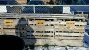 Compost -argyle's bin