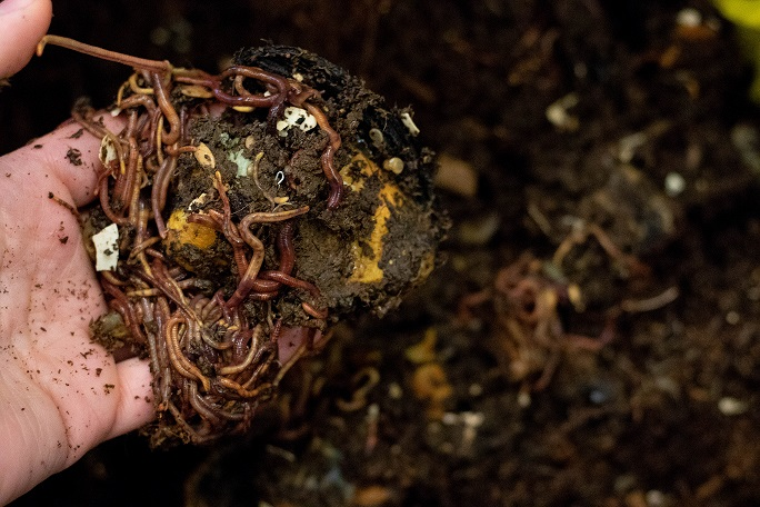 Learn how to vermicompost