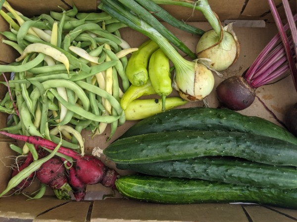5 Tips for Preserving your Harvest